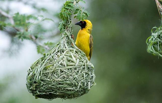 Росіянина в Індії могли заарештувати через схильність птахів до крадіжок