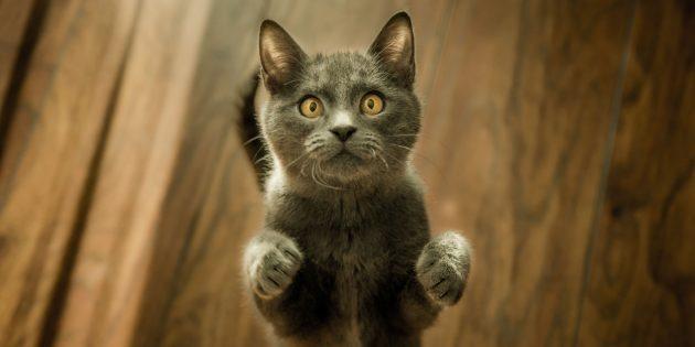 В доме нет кошки, а почему чувствуется ее запах?
